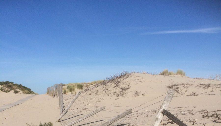 De gehele Nederlandse kust onder het toeziend oog van tientallen boa's