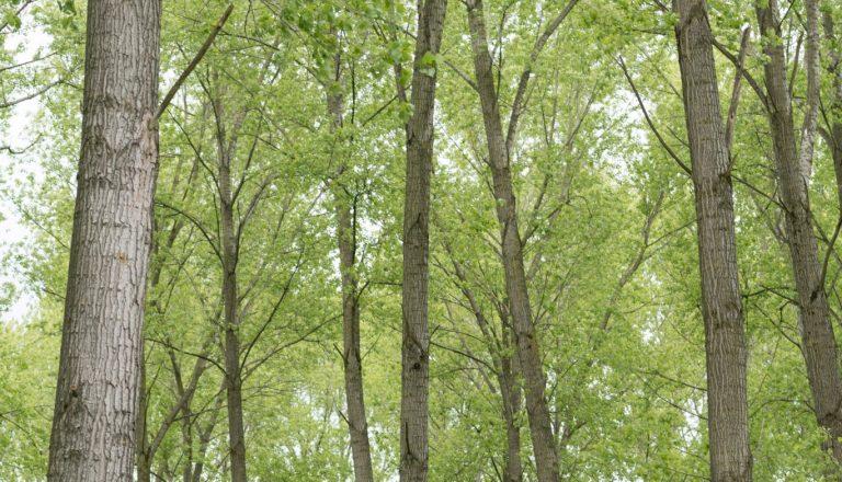 Houtopstanden: het kappen of vellen van bomen
